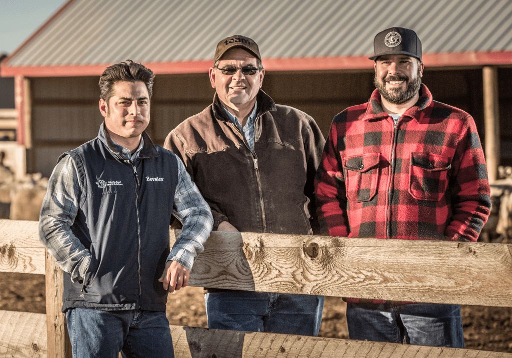 SunGold Lamb Producers